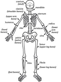Diagram Of Lymph Nodes In The Abdomen also Knee together with Hip Bone Tumor Diagram moreover Ailments moreover Human Bone Diagram For Kids. on left knee anatomy diagram