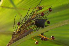 Bananaquit | Endless Wildlife