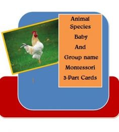 Animal Species, Baby And Group Name 3-Part Cards Montessori - Household Helps   CurrClick