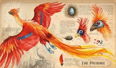 "And here's another beautiful illustration from inside the book that shows the phoenix. | Here's A First Look At The Fully Illustrated ""Harry Potter And The Chamber Of Secrets"""