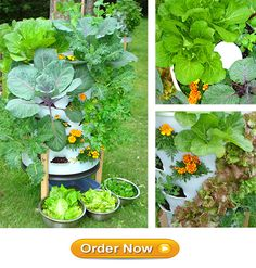 Here's an interesting riff on the keyhole garden concept. It's a composter and planter in one. You could easily make one yourself, or, if you're lazy like me, order one at this website.