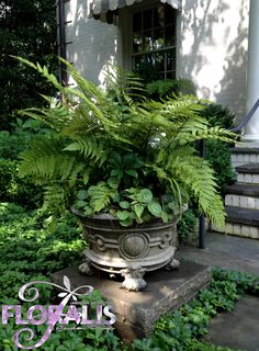 I like this container - break from the norm - great for a shady area on a patio or front entry