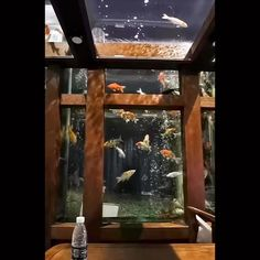 One of the most beautiful Koi fish tank on the night! Fish Tank Design, Pond Design, Home Aquarium, Aquarium Design, Tattoo Mermaid, Mermaid Mermaid, Vintage Mermaid, Home Interior Design, Interior And Exterior