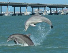 Dolphin Research and Sea Life Nature Center-South Padre Island, Texas