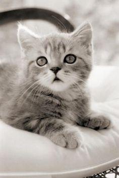 What an Adorable Kitten!!