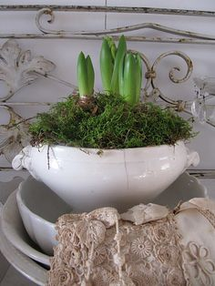 ironstone tureen planted with paperwhites