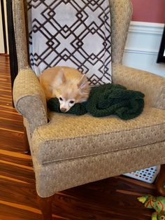 Nana found me sleeping on a fresh from the needles cowl.