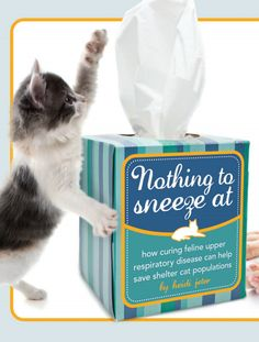 Feline upper respiratory disease is nothing to sneeze at. Learn how a study funded by the Morris Animal Foundation is working to stop the disease - and save shelter cat populations