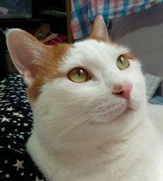 잘생겼다~!!! #cat