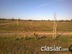 Terreno en Venta en Ibarlucea: Av. del Limite 6639 http://ibarlucea.clasiar.com/terreno-en-venta-en-ibarlucea-av-del-limite-6639-id-252977