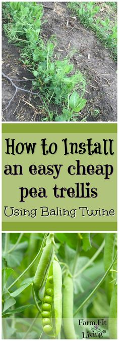 Looking for an easy and cheaper way to support growing pea plants? Have you thought about using baling twine? Here are the steps to install an easy cheap pea trellis with twine Gardening For Beginners, Gardening Tips, Gardening Gloves, Pea Trellis, Garden Trellis, Growing Peas, Strawberry Planters, Organic Gardening, Vegetable Gardening