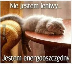 The Truth About Homemade Energy Saving Systems Cute Cats And Dogs, Cool Pets, Animals And Pets, Funny Animals, Wtf Funny, Funny Cute, Polish Memes, Weekend Humor, Colors For Dark Skin