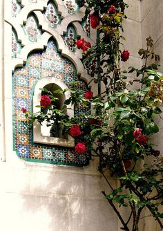 Roses next to a beautifully tiled Moroccan window.
