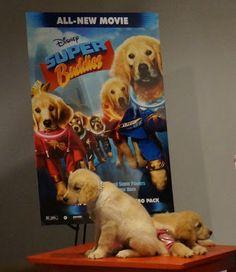 Meeting the Super Buddies @Colleen Sweeney Egan Disney Studios Get the movie Aug 27th, 2013!