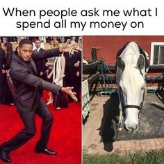 This will be me when I finally buy a horse