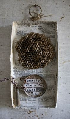 Beauty's where you find it - Wasp Nest mounted on vintage paper covered box with vintage findings