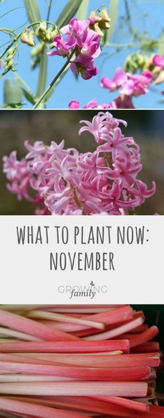A guide to flowers and crops that you can plant in November for harvesting and blooming over the coming months. Heres what to plant now. #NaturalRemediesForUti