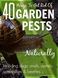Loads of great natural tips for getting rid of garden pests ... everything from slugs & snails to aphids & beetles ...
