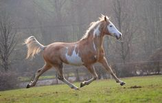 Palomino, Horses, Painting, Horse Photos, Horse, Painting Art, Paintings, Painted Canvas, Drawings