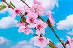 Filastrocche di Primavera Poems, Plants, Google, Spring, Poetry, Verses, Plant, Poem, Planets
