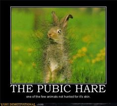 The Pubic Hare - funny pictures - funny photos - funny images - funny pics - funny quotes - funny animals @ humor Funny Images, Funny Photos, Funny Animals, Cute Animals, Wild Animals, Latest Jokes, Funny Rabbit, Pet Rabbit, Demotivational Posters