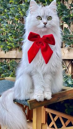 Cute Cats And Kittens, Baby Cats, Kittens Cutest, Baby Animals Pictures, Cute Baby Animals, Beautiful Cats, Animals Beautiful, Modern Disney Characters, All About Cats