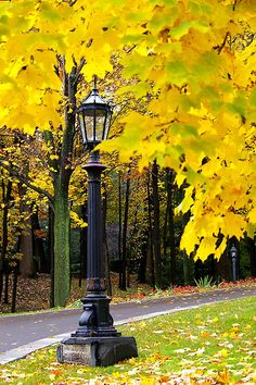 A quaint light pole in the midst of a blaze of bright yellow autumn leaves