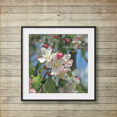 Apple Blossoms Pink & White Flowers by MelissaReesePeterson