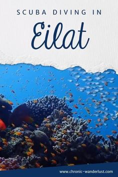 Are you planning a trip to Israel and really want to go scuba diving as well? Then Eilat is the perfect place for you! Enjoy beautiful dive sites in Eilat and have fun exploring the underwater world! Adventure Activities, Travel Activities, Adventure Bucket List, Adventure Travel, Amazing Destinations, Travel Destinations, Solo Travel, Asia Travel, Eilat