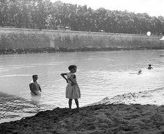 Roma Sparita - Tevere  1954 Penguins, Animals, Bella, Porto, Rome, Italia, Animales, Animaux, Penguin