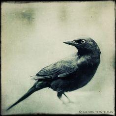 black bird print