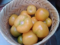 Los tomates de la milpa de la variedad local, no se cultivan mezclando semilla, son amarillos y mucho mas dulces. Solo compramos cosas cultivadas a menos de 10 Kms a la redonda.