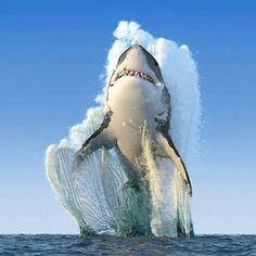 Stunning picture of shark rising from water.