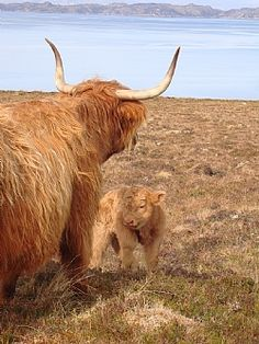 Holiday Cottage in Applecross, Scottish Highlands, Scotland this one i love! Scottish Highlands, Highlands Scotland, Wild Deer, Holiday Lettings, All Gods Creatures, Cottage, Easter, Animals, Animales