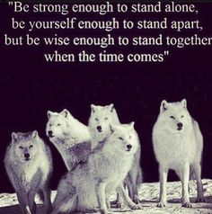 Discover and share She Wolf Quotes. Explore our collection of motivational and famous quotes by authors you know and love. Great Quotes, Quotes To Live By, Me Quotes, Inspirational Quotes, Daily Quotes, Wisdom Quotes, Spirit Quotes, Quotes Images, Famous Quotes
