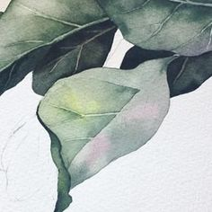 Plant Leaves, Instagram, Photo And Video, Abstract, Artwork, Flowers, Plants, Painting, Watercolors