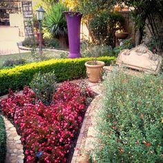 Designer Gardens Landscaping www.designergardenlandscaping.co.za Garden Landscaping, Garden Design, Gardens, Landscape, Plants, Front Yard Landscaping, Scenery, Outdoor Gardens, Landscape Designs
