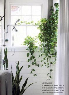 plantas dentro do banheiro! melhor as que suportam mais umidade!