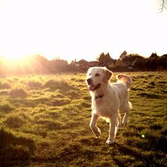 Another entry in our Pretty BIG Dog Photography Competition.