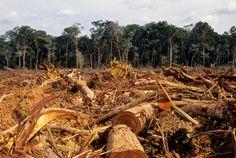stop illegal logging