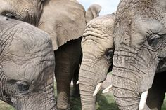 Knysna Elephant Sanctuary / JessOnThames Elephant Sanctuary, Knysna, Getting Out, Elephants, South Africa, Earth, Places, Nature, Animals