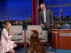 amanda seyfried dogs photos   Amanda Seyfried's Dog Trick On Letterman - Business Insider