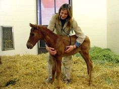 equine veterinarian BAABBYYY!!!!