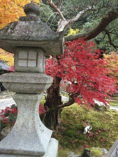 Die besten 25 japanischer ahorn ideen auf pinterest japanischer ahorn garten ahorn baum und - Asiatische gartendeko ...