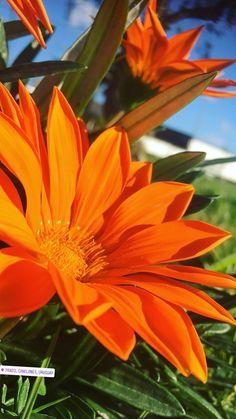 #nature #sky #sun #summer #beach #beautiful #pretty #sunset #sunrise #blue #flowers #night #tree #twilight #clouds #beauty #light #cloudporn #photooftheday #love #green #skylovers #dusk #weather #day #red #iphonesia #mothernature