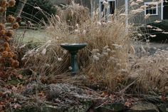 Birds that spend the winter in our area need water as well as food. Invest in a heated birdbath, and be sure to keep it filled.
