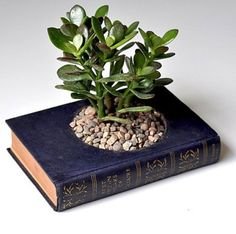 Reclycle Old Books  http://myhoneysplace.com/recycle-old-books/ I do not like the looks of this plant but like the idea of a forest growing out of a book, like ivy, moss, or something like that.