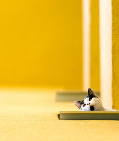Curiosity by photographer Marian Gabriel