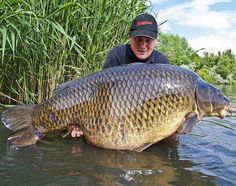 I've found these amazing pictures of an apparent world record common carp of caught by a chap called Graham Marsden. Best Fishing Kayak, Gone Fishing, Carp Fishing, Fishing Tips, Sea Angling, Common Carp, Monster Fishing, Fishing Photos, Vintage Fishing Lures