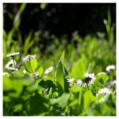 Gioco di sca...tti Herbs, Garden, Plants, Garten, Herb, Gardens, Planters, Tuin, Plant